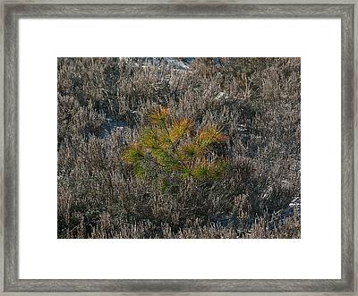 Evergreen  Framed Print by Juergen Roth