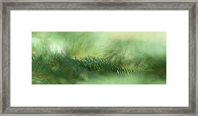 Evergreen Mist Framed Print by Ann Lauwers