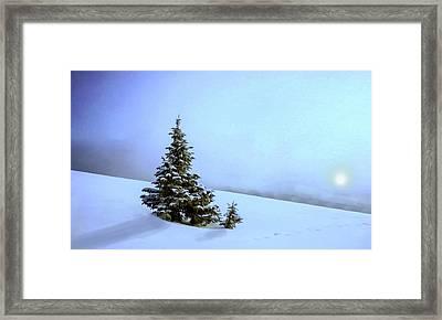 Evergreen Offspring P D P Framed Print