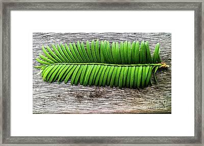 Evergreen On Wood 1 Framed Print