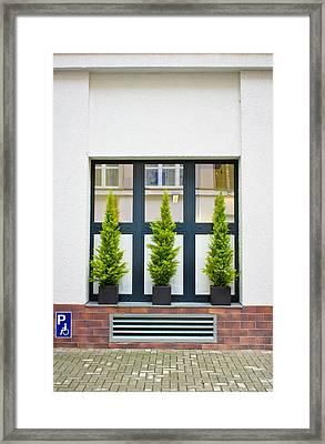 Evergreen Shrubs Framed Print by Tom Gowanlock