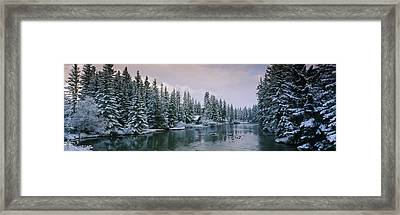 Evergreen Trees Covered With Snow Framed Print