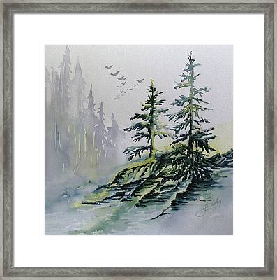 Evergreens In The Mist Framed Print