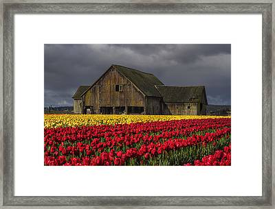 Everlasting Blooms Framed Print by Mark Kiver