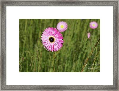 Everlasting  Framed Print by Cassandra Buckley