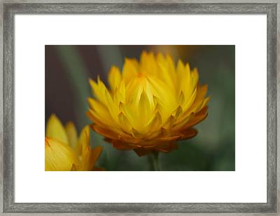 Everlasting Framed Print by Connie Handscomb