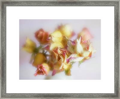 Everlasting Rose Buds Framed Print
