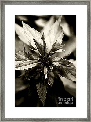 Evermore Framed Print by Linda Shafer