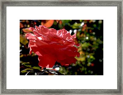 Every Petal Counts Framed Print by Christopher Phelps