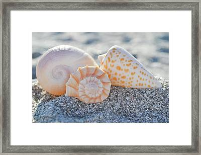 Framed Print featuring the photograph Every Shell Has A Story by Melanie Moraga
