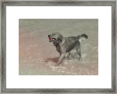Everyones Best Friend Framed Print by JAMART Photography