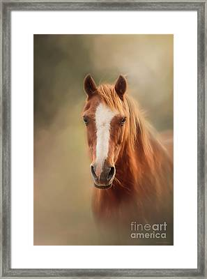 Everyone's Favourite Pony Framed Print