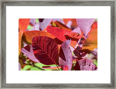 Framed Print featuring the photograph Everything Is Extraordinary by Linda Lees