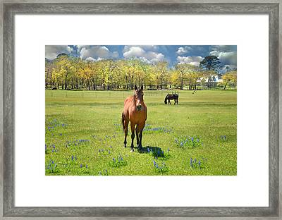 Everything's Better With Bluebonnets Framed Print by Lynn Bauer