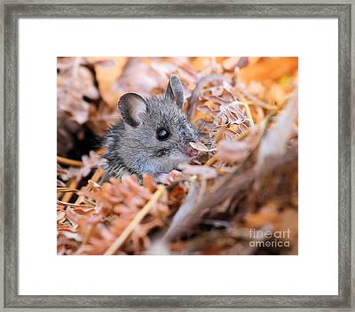 Evicted To The Wilds Framed Print