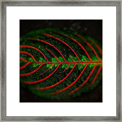 Evolution #3 @gillespieflorists #love Framed Print by David Haskett