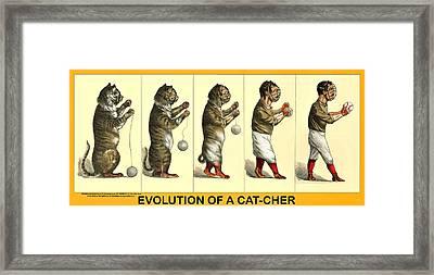 Evolution Of A Cat-cher Framed Print