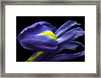 Evolving Iris. Framed Print by Terence Davis