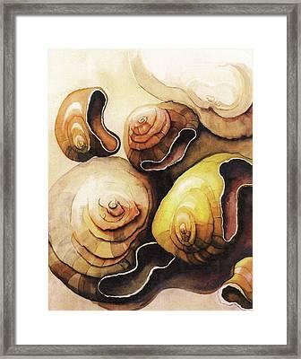 Evolving Shells Framed Print by Lynda Lehmann