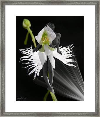 Evy Framed Print by Torie Tiffany