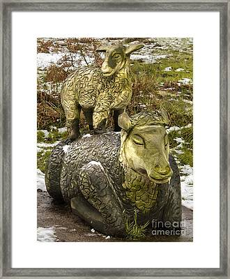 Ewe And Lamb Framed Print