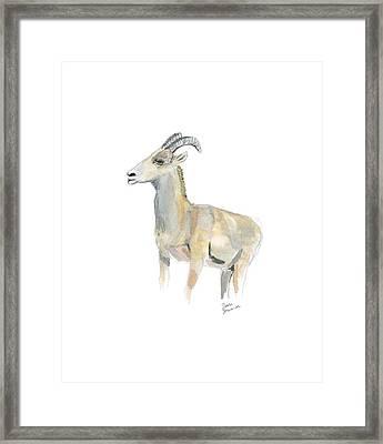 Ewe Framed Print