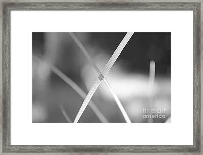 eXcellence  Framed Print by Eva Maria Nova