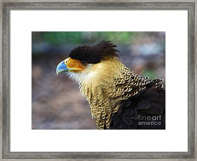 Excited Caracara Framed Print