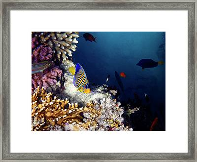 Exciting Red Sea World Framed Print