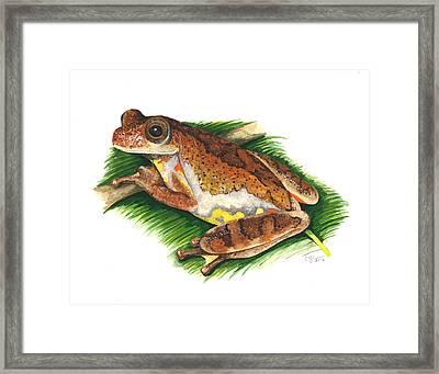 Executioner Treefrog Framed Print