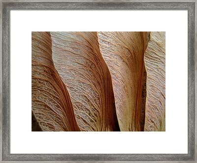 Exercise In Texture Framed Print
