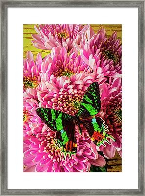 Exotic Beauty Framed Print