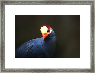 Framed Print featuring the photograph Exotic Bird by Heidi Poulin