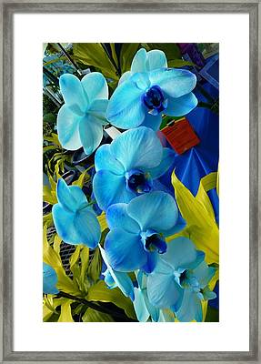Exotic Blue Orchids Framed Print by Jeanette Oberholtzer