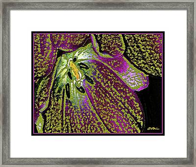 Exotic Framed Print by Claudia O'Brien