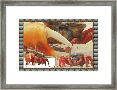 Exotic Crabs Wild Varieties Unique Mating And Crecreation Styles Grand Sizes Building Tunnels In Sta Framed Print by Navin Joshi