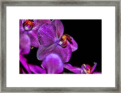 Framed Print featuring the photograph Exotic by Diana Mary Sharpton