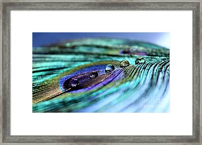 Exotic Drops Of Life Framed Print