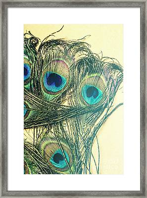 Exotic Eye Of The Peacock Framed Print by Jorgo Photography - Wall Art Gallery