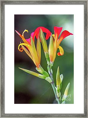 Exotic Flowers Framed Print