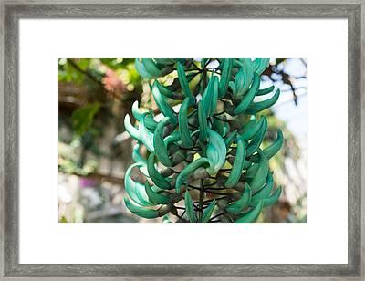 Exotic Jade Vine Framed Print by Georgia Mizuleva