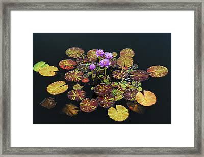 Exotic Lilies Framed Print by Kurt Shaffer