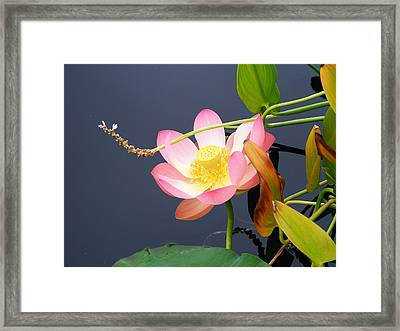 Framed Print featuring the photograph Exotic Waterlily by Margie Avellino