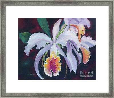Exotic White Orchid Framed Print