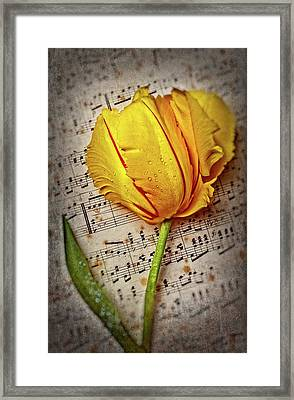 Exotic Wonderful French Tulip Framed Print