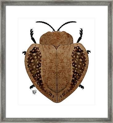 Exotic Wood Tortoise Beetle Framed Print by Stephen Kinsey