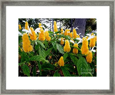 Exotic Yellow Blooms Framed Print by Mary Deal