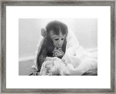 Experimental Monkey Framed Print by Science Source