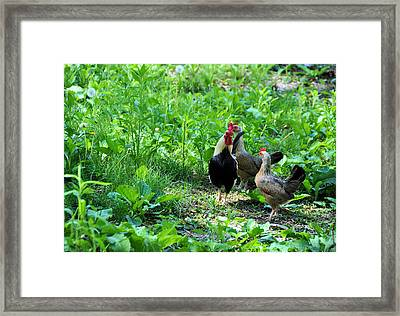 Explaining Framed Print by Jan Amiss Photography