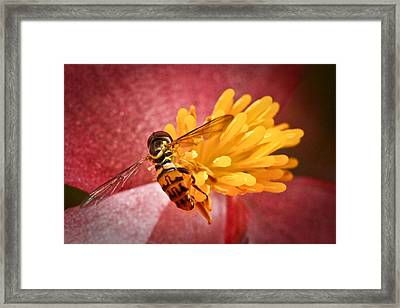 Exploring A Flower Framed Print by Ryan Kelly